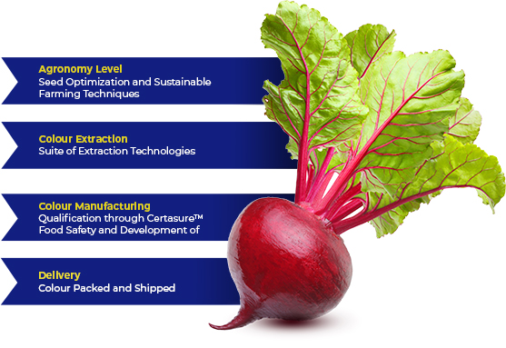 customer-first-beet