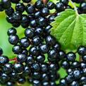 5-Elderberry