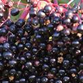 7-Maqui-Berry
