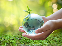 A human hand holding a transparent earth with a big tree sprouting from it